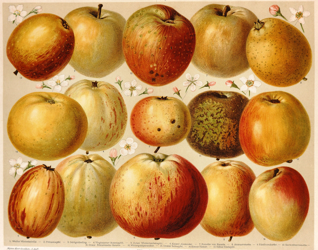 Apples,  Antique Chromolithograph (1895) - Original and Authentic Vintage Poster