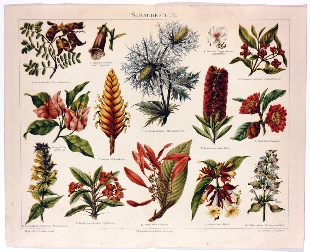 Tropical Flowers, Plants, Aechmea, Bottlebrush Antique Chromolithograph (1895) - Original and Authentic Vintage Poster
