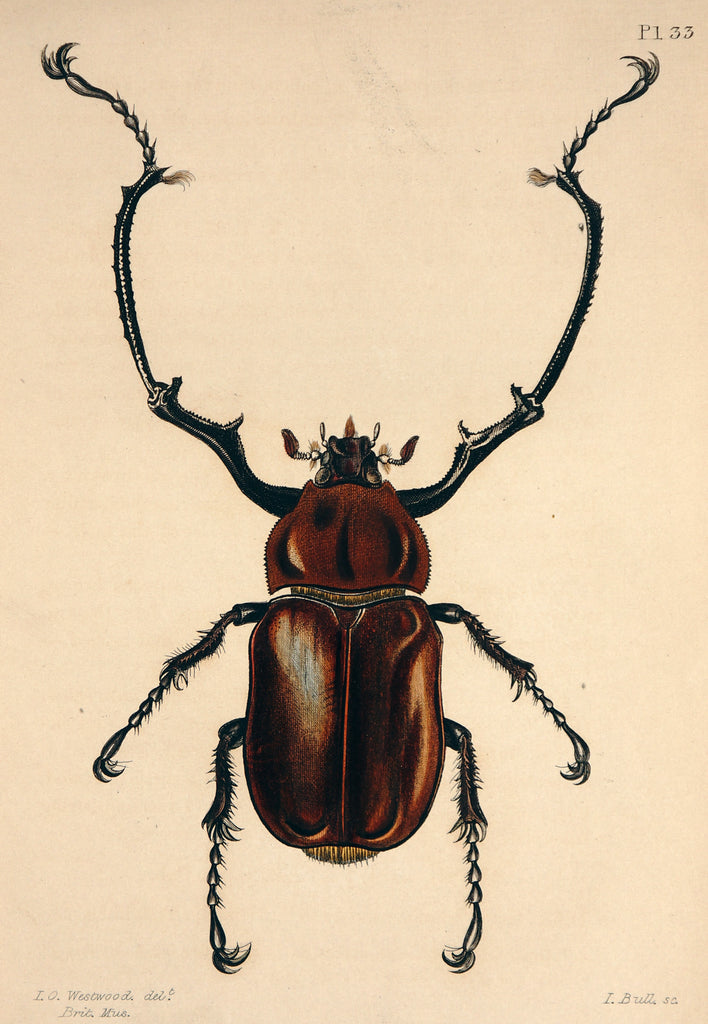 Cuvier, Baron 1832 Lot of 9 Hand Col Prints. Insects 2 - Original and Authentic Vintage Poster