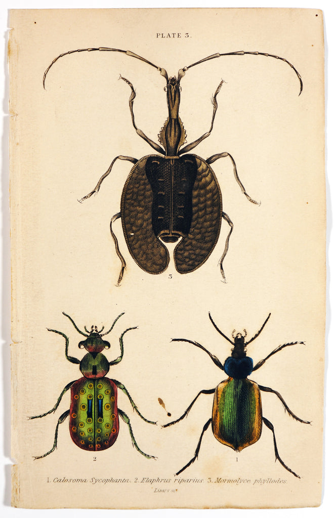 Beetles & Insects, Hand Colored Engraving (c1840) - Original and Authentic Vintage Poster
