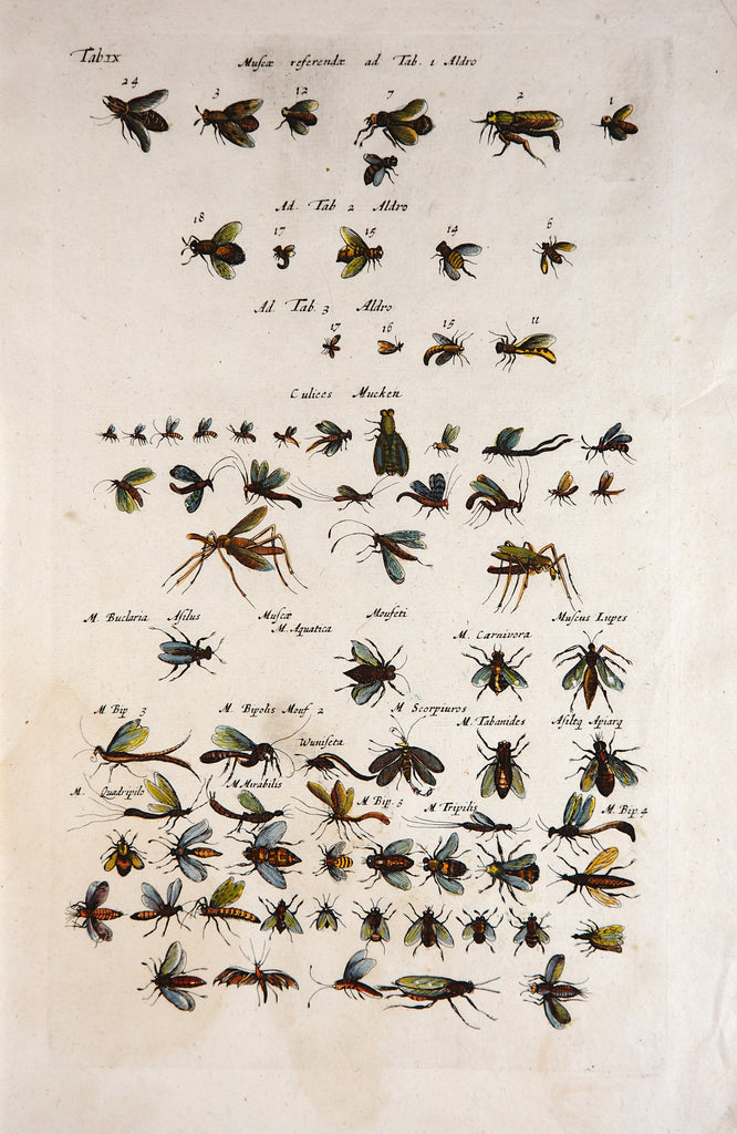 Wasps, Bugs, Flies, & Insects, Hand Colored Engraving (1657) - Original and Authentic Vintage Poster