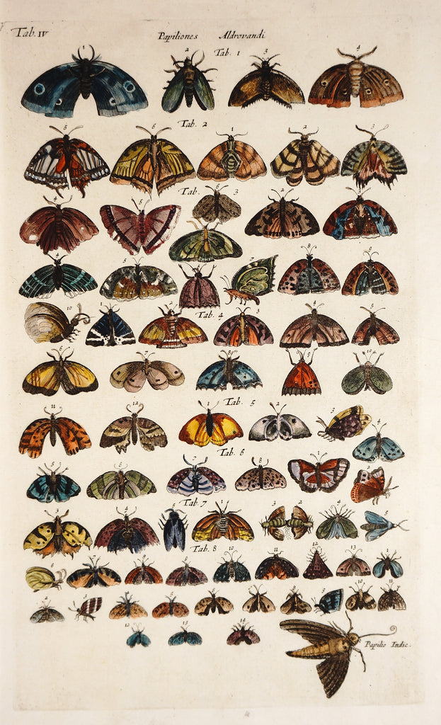 Butterflies & Moths, Hand Colored Engraving (1657) - Original and Authentic Vintage Poster