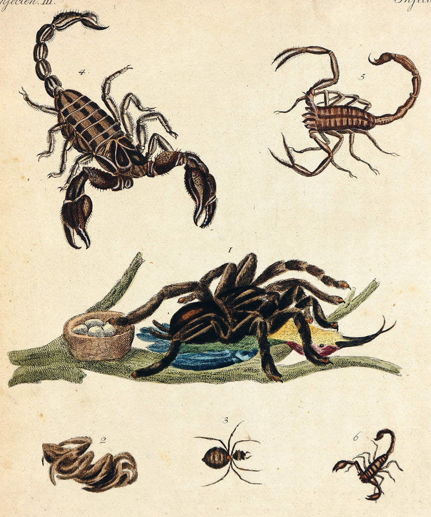 Scorpion, Bilderbuch für Kinder Bertuch (c1800) - Original and Authentic Vintage Poster