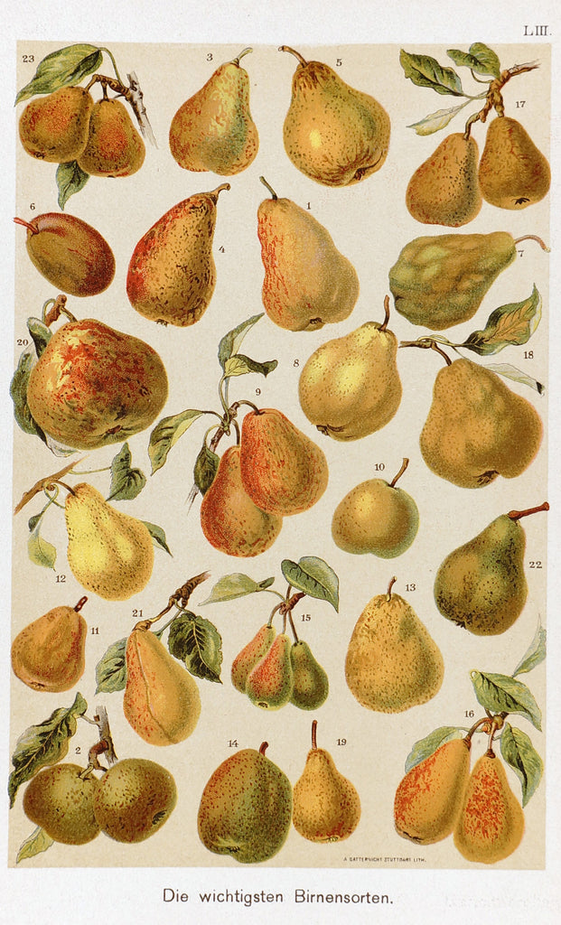 Pears Antique Chromolithograph (1890s) - Original and Authentic Vintage Poster