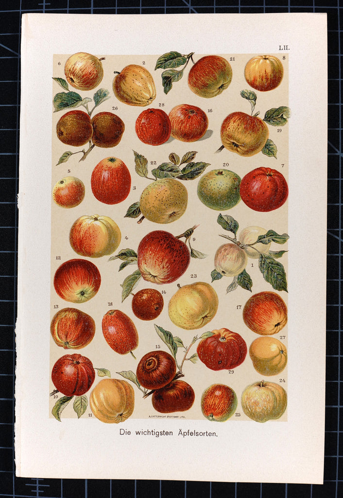 Apples Antique Chromolithograph (1890s) - Original and Authentic Vintage Poster