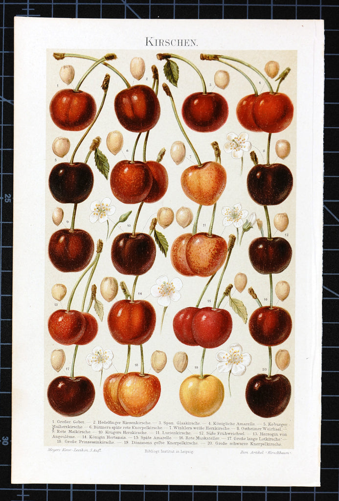 Fruit- Cherry Antique Chromolithograph (1895) - Original and Authentic Vintage Poster