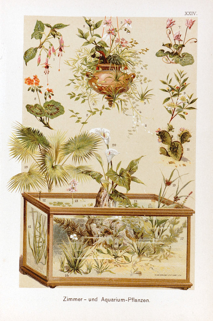 Aquarium Plants, Chromolithograph (1890) - Original and Authentic Vintage Poster