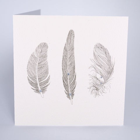 Feathers (No Caption)