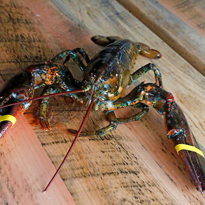 Live Hard Shell Lobster