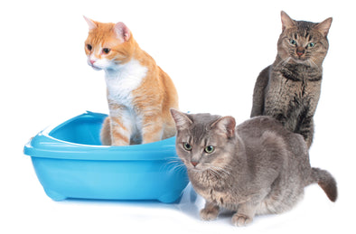 Cat Litter Box Problems: 7 Essential Keys To Solve The Problem Quickly!