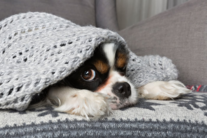 Top tips to keeping your pets calm during fireworks