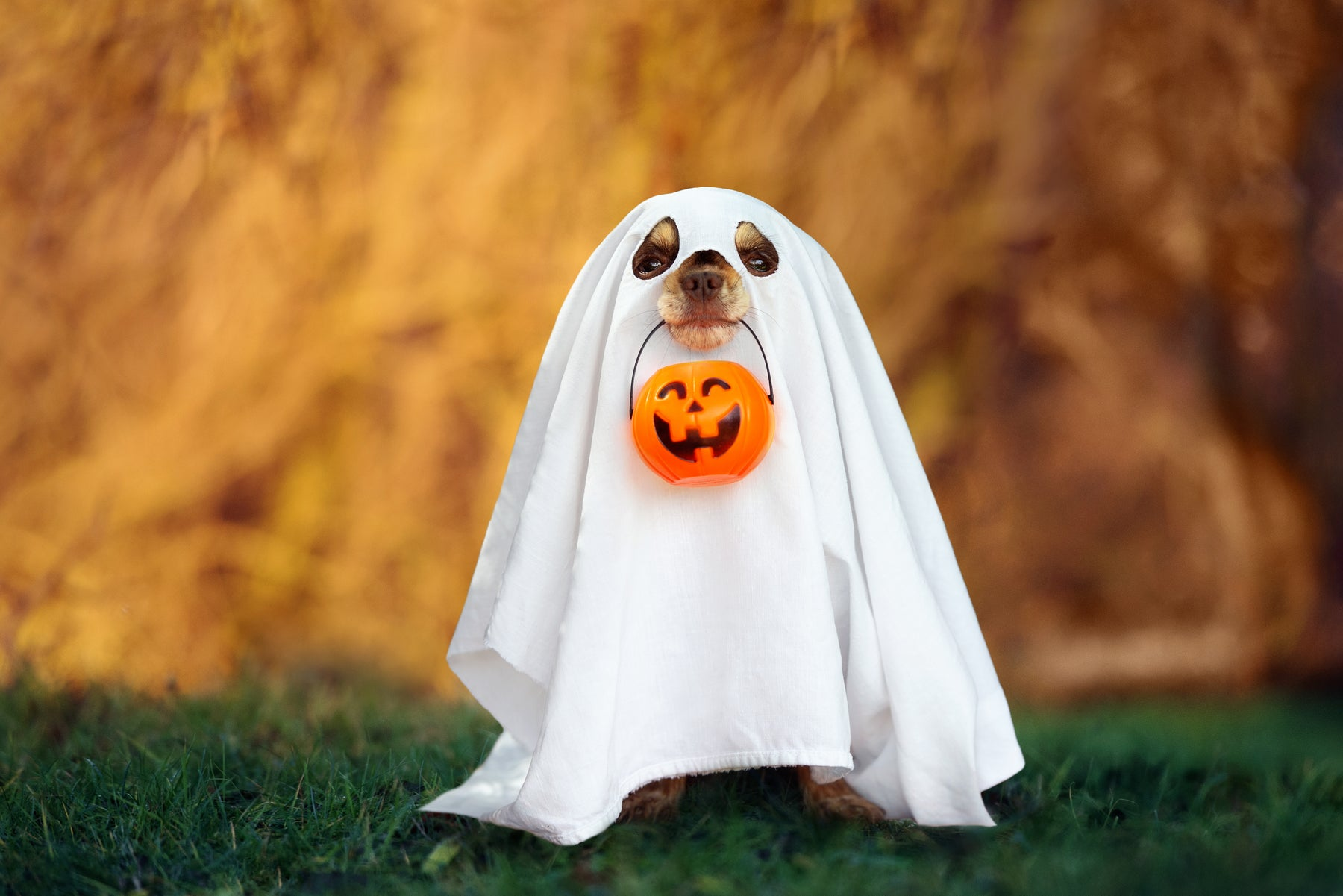 Keeping your pets safe at Halloween