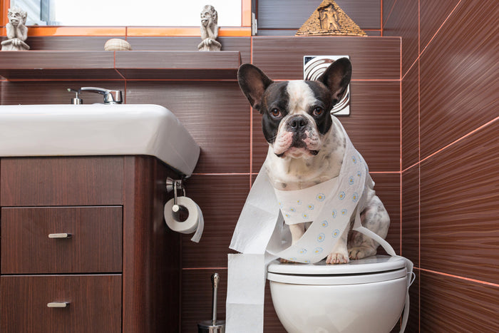 Does Your Dog Have Diarrhoea?