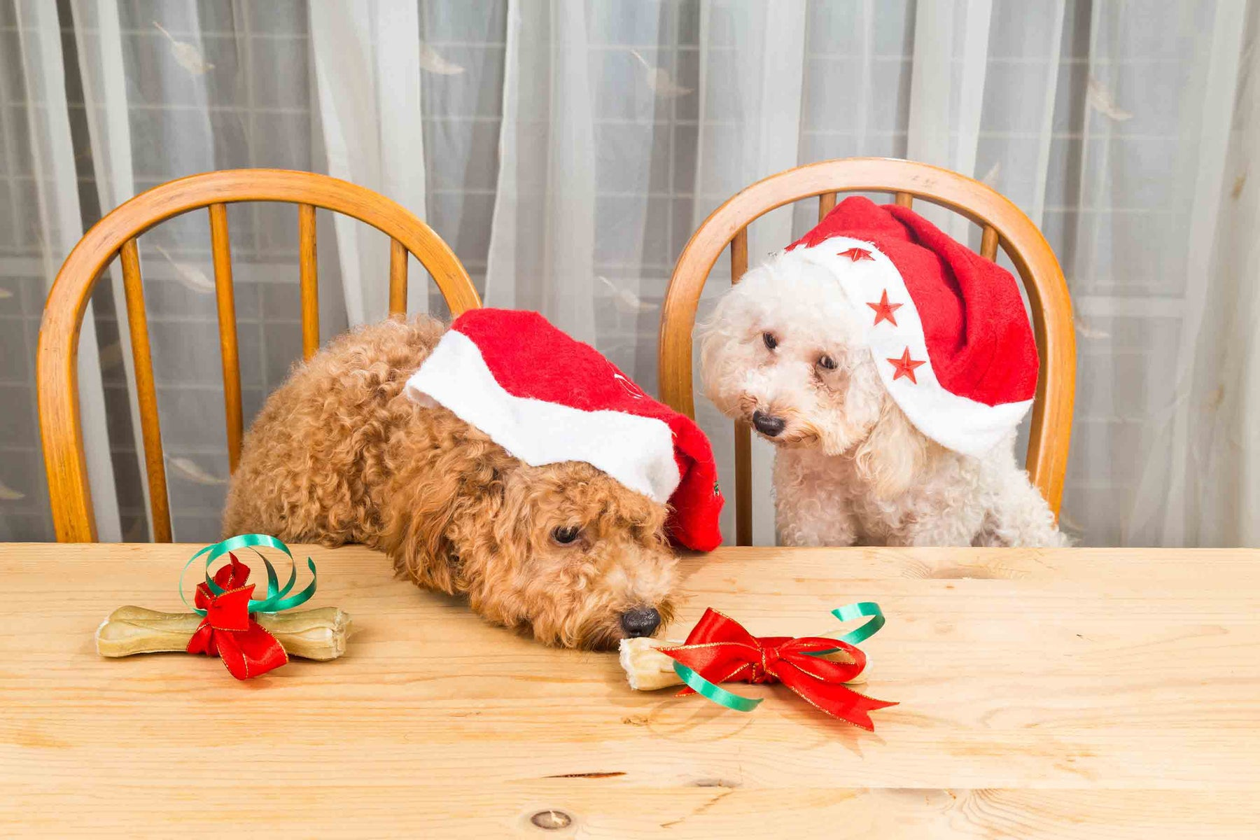 Can Dogs Eat Christmas Dinner?