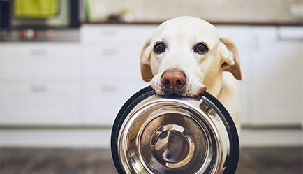Common raw dog food myths
