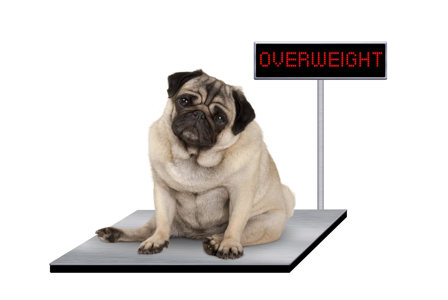 How To Find Out If Your Dog Is Overweight.