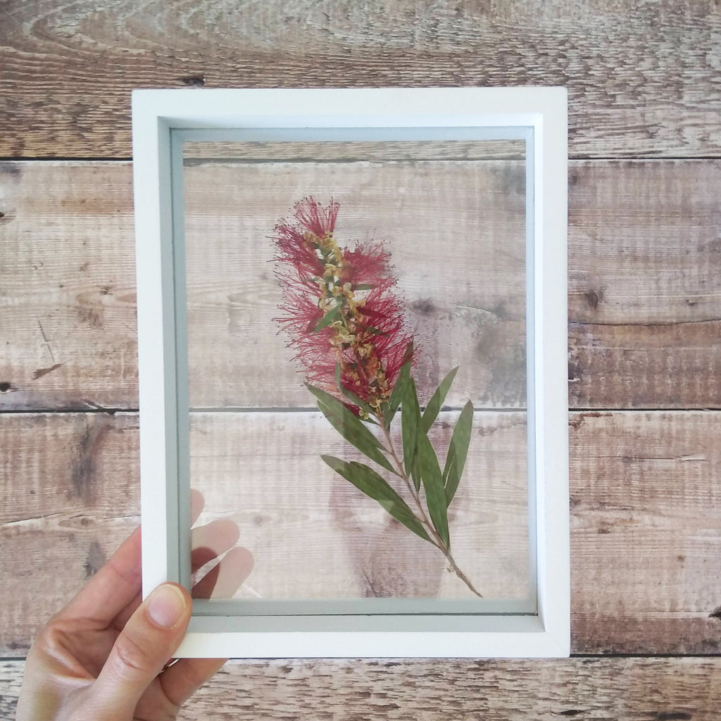 Create your own wall art with native plants