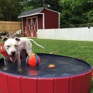 Foldable Paw pool