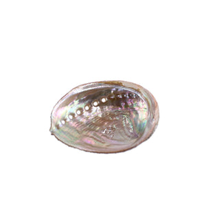 SMALL ABALONE SHELL - Energy Wicks