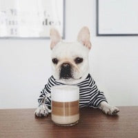Caffeine coffee tea dangerous for dogs