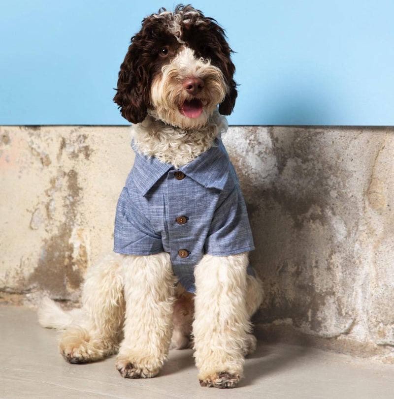 Chambray Shirt Dog Threads