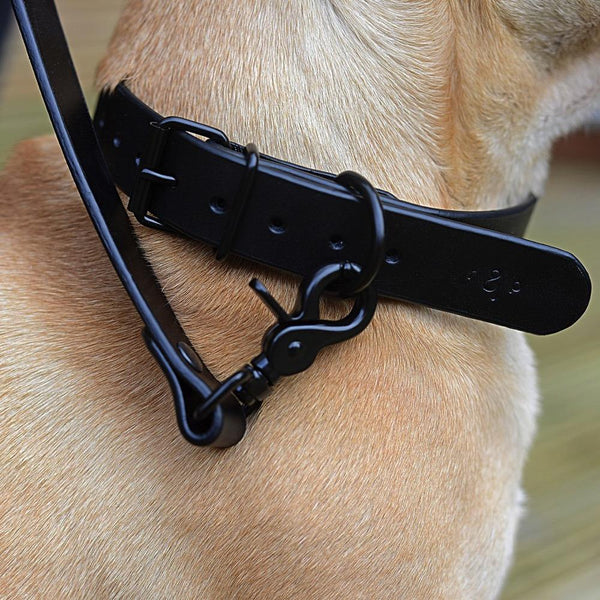 Matte Black Lead RAG&PAW