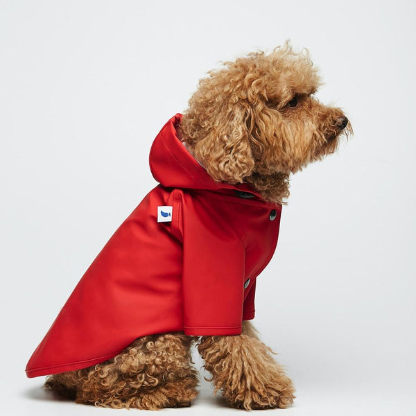 Raincoat Sarah Eco Friendly The Painter's Wife 10 (e.g. Toy Poodle) Red