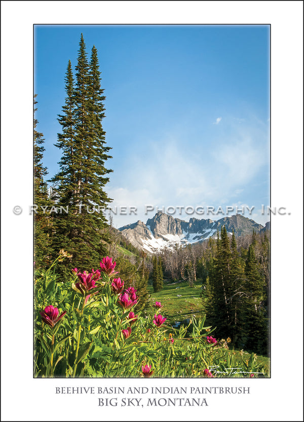 Beehive Basin and Indian Paintbrush - Notecard