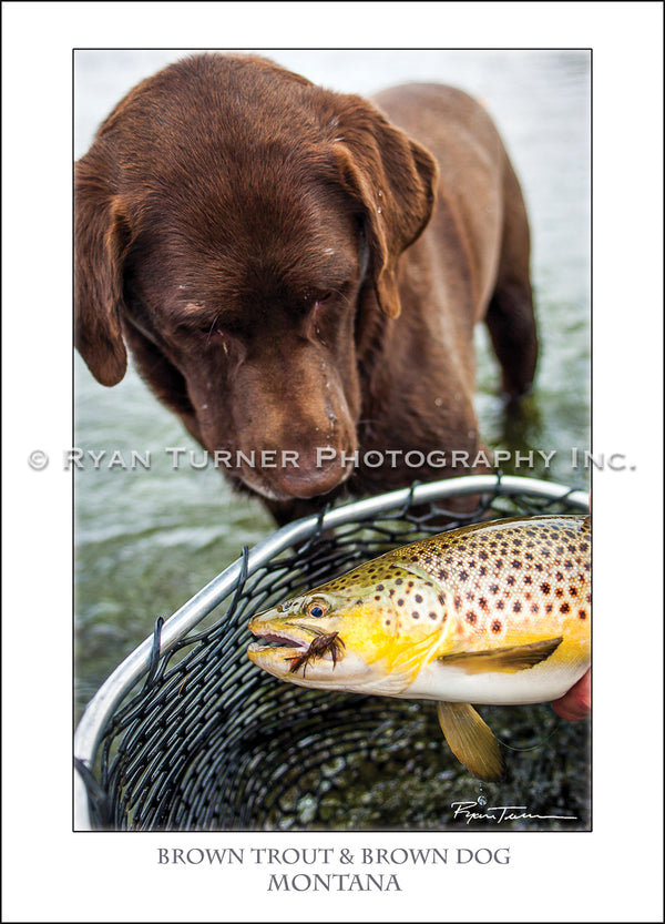 Brown Trout & Brown Dog - Notecard