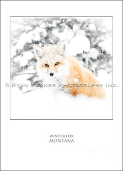 Winter Fox - Notecard