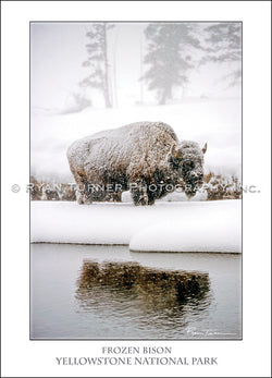 Frozen Bison - Notecard