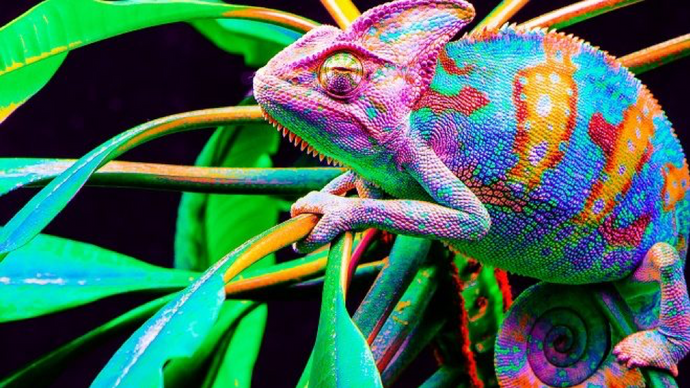 How Come Certain Pigments Change Color Like a Chameleon?