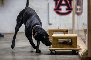 Training detection dogs safely, using an odor absorbing material