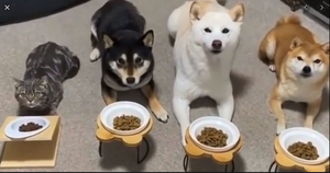 Accurately measuring meal portions for your pet