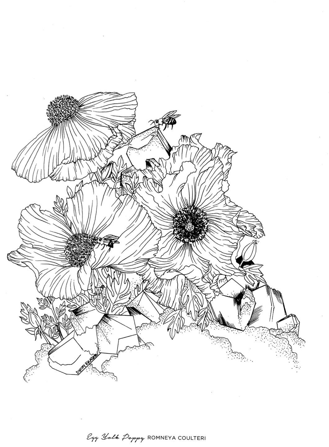 FREE COLORING PAGE - EGG YOLK POPPY