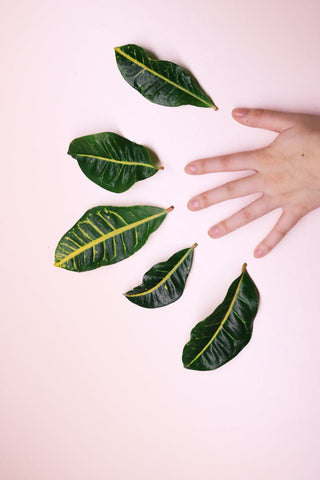 A hand on a light pink background, with green leaves above each fingertip, for Ivy Leaf Skincare