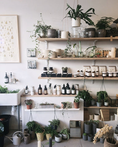Wall of shelves loaded with plants and skincare bottles, for Ivy Leaf Skincare