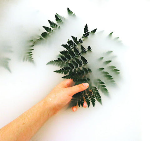 Handing pulling dark green plant leaves out of milky white substance, for Ivy Leaf Skincare blog