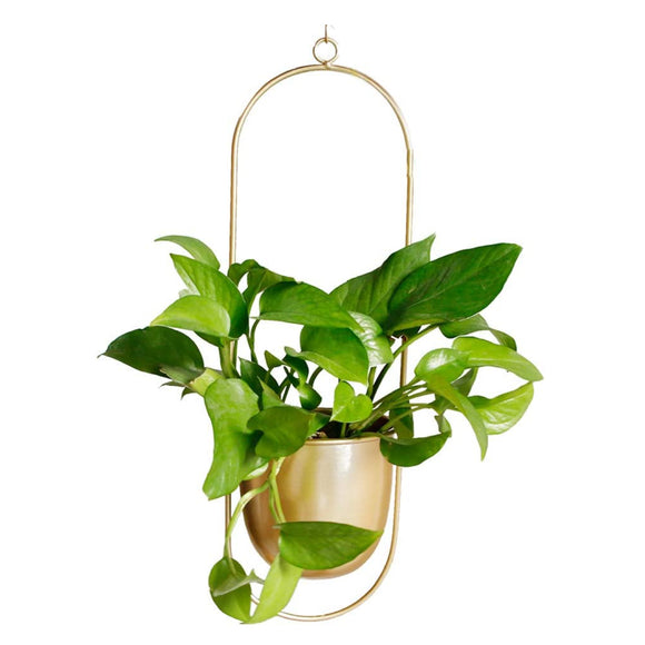 Not Your Grandma's Hanging Planter