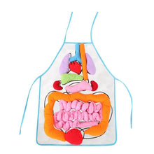 Load image into Gallery viewer, Montessori Educational Anatomy Apron