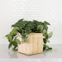 Load image into Gallery viewer, Satin Pothos Plant and Handwoven Basket