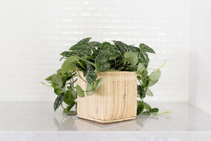 Satin Pothos Plant and Handwoven Basket