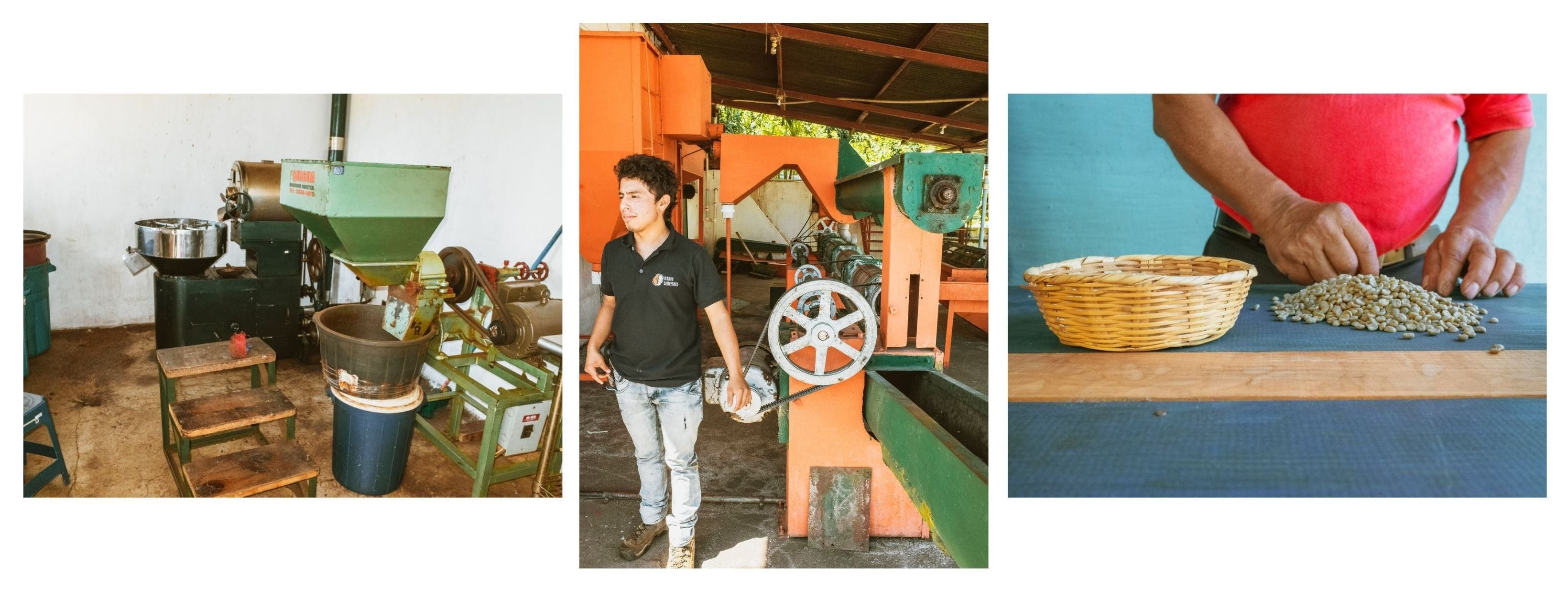 Milling and sorting raw coffee