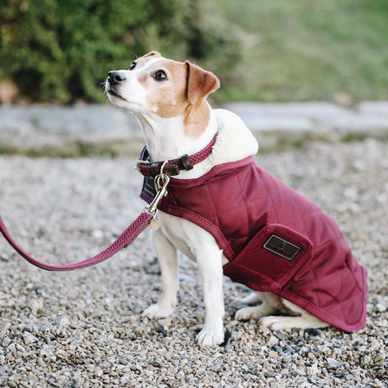 Kentucky Horsewear - Colliers pour chiens bordeaux | - Ohlala