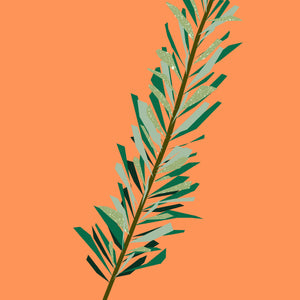 Rosemary Essential Oils