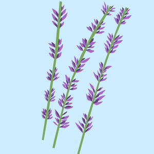 Lavender Essential Oil - The Nature Of Things