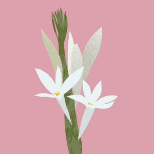 Tuberose Absolute (20% in jojoba oil)