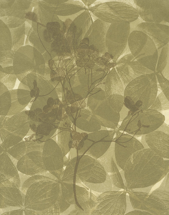 Sally Ayre - Shift #14 (Hydrangea)