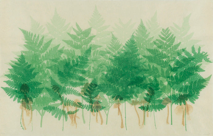 Sally Ayre - Ferns