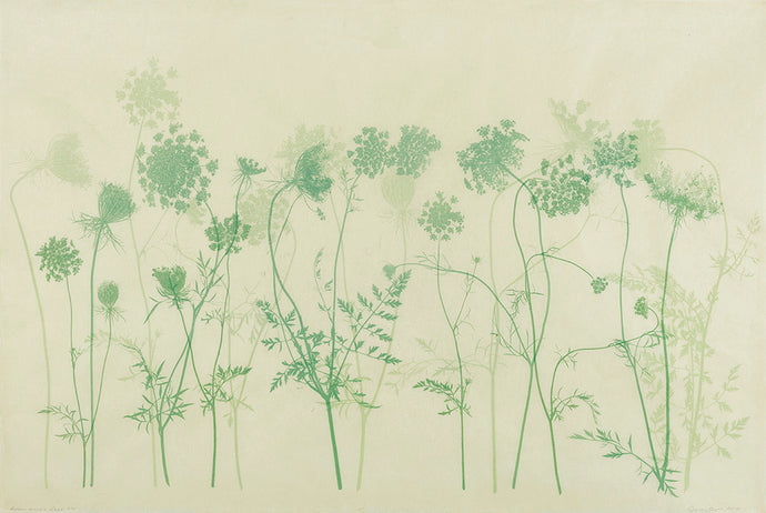 Sally Ayre - Queen Anne's Lace
